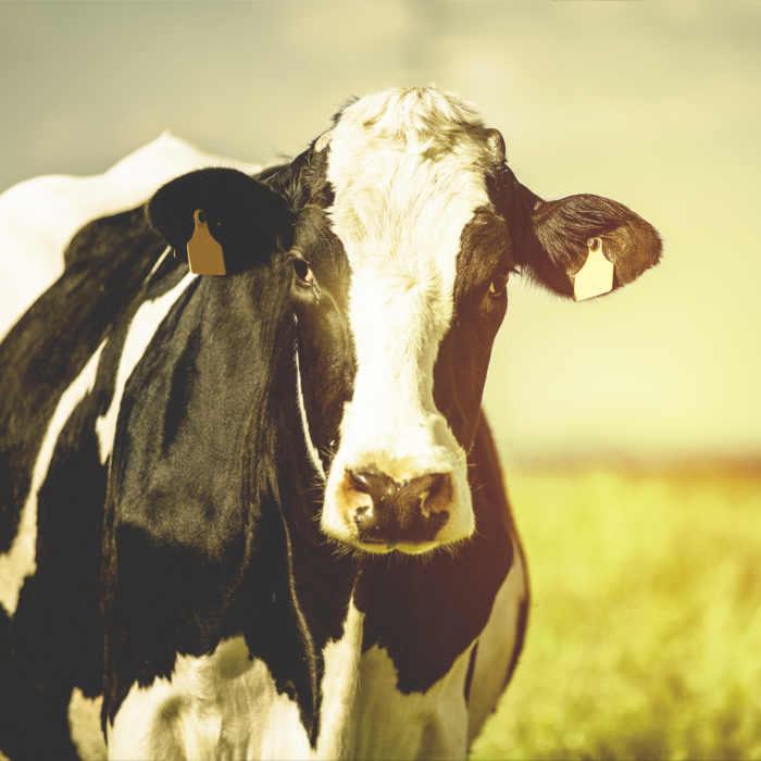 industria ganader erp sap optimizacion proceso